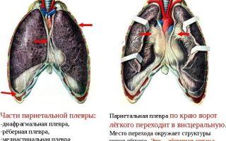 Опасность плевродиафрагмальные спаек в лёгких. Проверьте себя